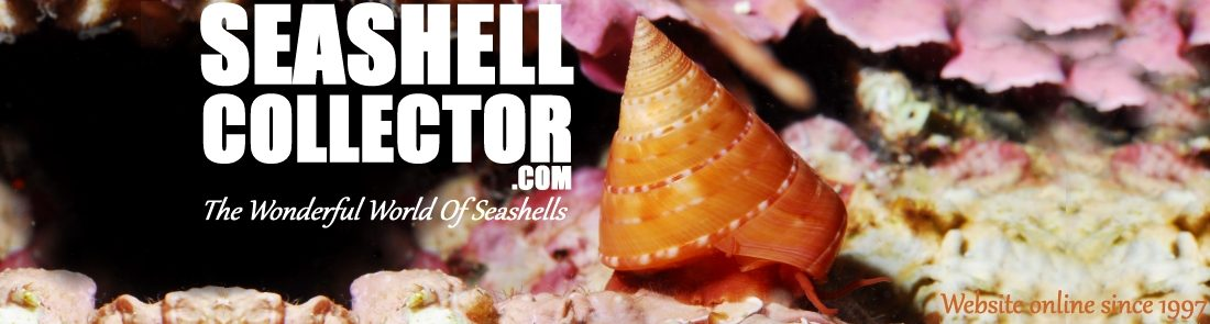 SEASHELL COLLECTOR